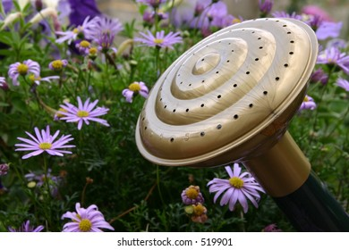 The head of a watering can with some flowers.