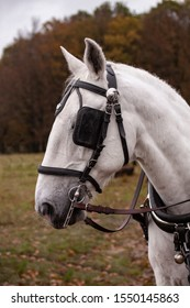 Head of a white horse with blinkers. Close up image