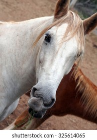 Head of white horse with red hair
