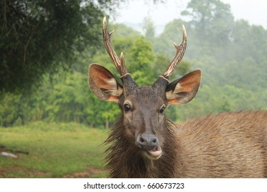 Head of wild dear with smiling face in National Park in Thailand