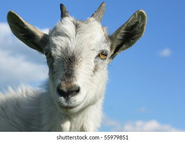 Head of young smiling goat over blue sky background