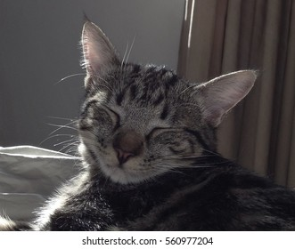 Head of young tabby cat turned to the camera, eyes closed, with back lighting