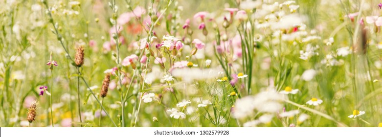 Header, flower meadow for insects, gardening with native and organic wildflowers
