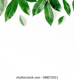 Header. Green leaves on white background. Flat lay, top view. Floral composition