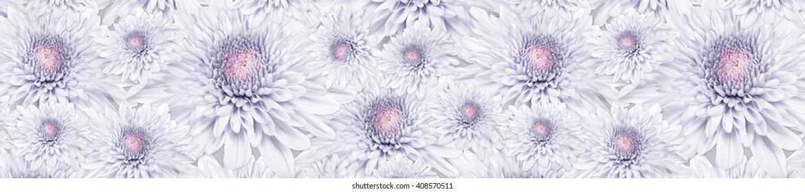 header panorama  pattern  pale pink flower chrysanthemum  heart-shaped