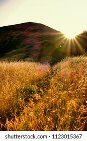 Headland of the Golden Gate National Recreation Area at bright sunshine, The Presidio, San Francisco, California, USA