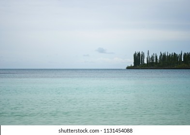 A headland on the Isle of Pines stretches into the tranquil blue water of the South Pacific. It is covered with pine trees. The sky is blue with faint clouds.