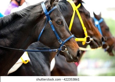 heads of racing horses before start loseup