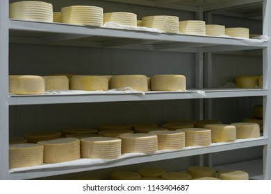 Heads of young cheese on shelves in finished goods warehouse on dairy farm. Cheese manufacture