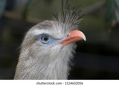 Headshot of a bird with orange beak and blue eyes