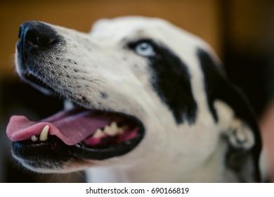 Headshot of a happy dog.