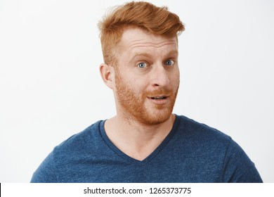 Headshot of intrigued good-looking ginger male with bristle in blue t-shirt turning at camera with impressed and curious expression, listening to interesting story carefully over gray background