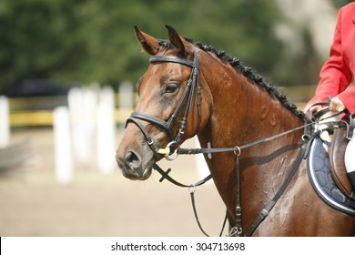 Head-shot of a show jumper horse during competition . Face of a beautiful purebred racehorse on a jumping competition