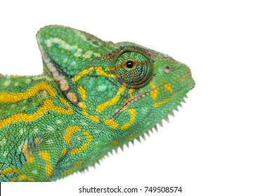 Headshot of a Yemen chameleon - Chamaeleo calyptratus - isolated on white