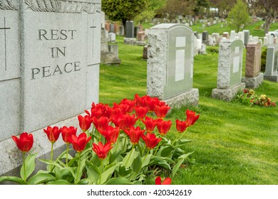 "Headstones in a cemetery with red tulips and ""rest in peace"" inscription."