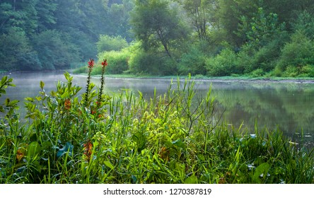 Headwaters of Ivy Creek Reservoir in Charlottesville, Virginia, in late August. Cardinal flowers (Lobelia cardinalis) in foreground.
