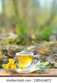 Healing herbal tea Coltsfoot. Fresh spring coltsfoot flowers with coltsfoot tea on nature background. Medicinal plant coltsfoot, Tussilago farfara, infusion in cup. close up, copy space