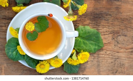 Healing herbal tea Coltsfoot. Fresh spring coltsfoot flower with coltsfoot tea on wooden table. Medicinal plant coltsfoot, Tussilago farfara, infusion in cup and ladybug, flowers. top view, copy space