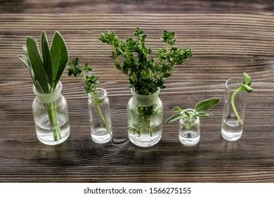 Healing herbs in glasses on dark wooden background