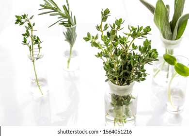 Healing herbs in glasses on white background
