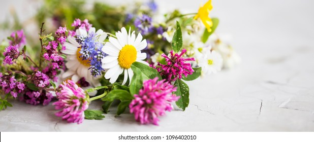 Healing herbs. Medicinal plants and flowers bouquet with mint, chamomile, thyme, clover, flax flowers