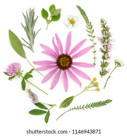 Healing herbs. Medicinal plants and flowers bouquet of echinacea, clover, yarrow, hyssop, sage, alfalfa, lavender, lemon balm, strawberry