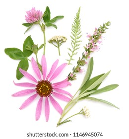 Healing herbs. Medicinal plants and flowers bouquet of echinacea, clover, yarrow, hyssop, sage