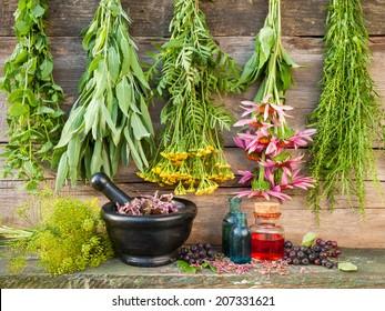 healing herbs on wooden wall, dried plants, herbal medicine