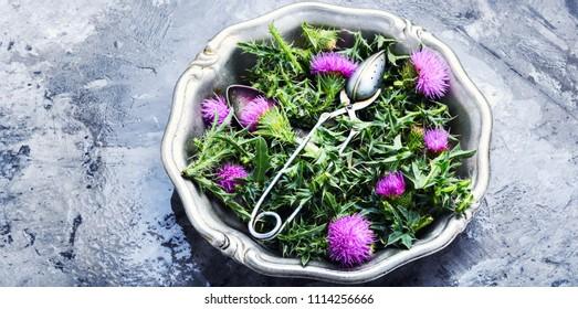 healing herbs thistle in mortar.Herbal medicine.Tea.Onopordum.Thistle.Natural herbal medicine