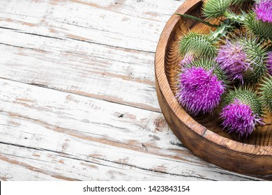 Healing herbs.Medicinal plant thistle.Pink thorny thistle flower.Silybum marianum.