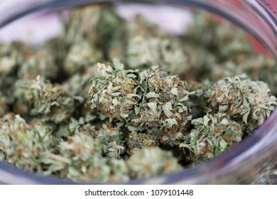 Healing medical strains of cannabis marijuana close-up