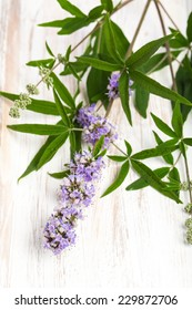 healing plants: Chasteberry (Vitex agnus castus) - cutout on board