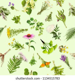 Healing plants with seamless pattern