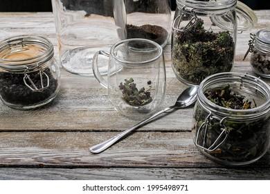 Heiltee aus Wildpflanzen und Doppelwaschbecher aus Glas auf rustikalem Holzhintergrund. Zutaten für hausgemachte Kräutertee. Glasversiegelte Behälter zur Lagerung von Lebensmitteln. Wilde natürliche Kräuter. Leerzeichen kopieren
