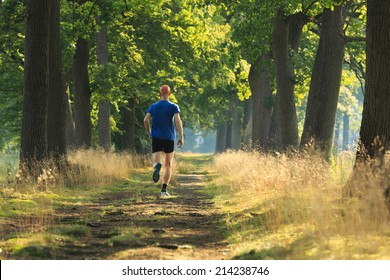 Healthy, active lifestyle man exercising outdoors: trail running in a lane of tree's on a sunny morning.