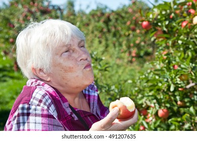 A healthy and active senior woman bites into a fresh apple right off the tree.