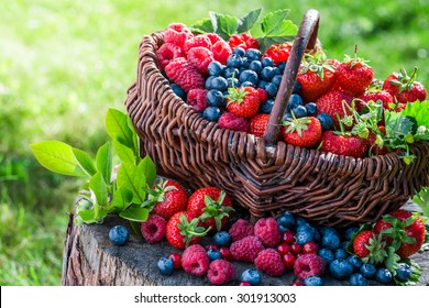 Healthy berries in sunny day