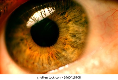 Healthy and colorful close up of young healthy human eye (macro photography) black iris and brown / green colors.