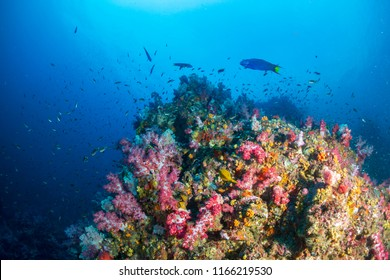 A healthy, colorful tropical coral reef swarmig with marine life
