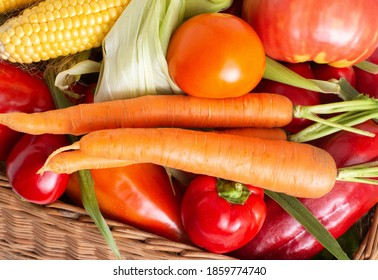 Healthy colorful vegetables grown in the garden, autumn harvest. Natural tomatoes, corn cobs and carrots, ingredient