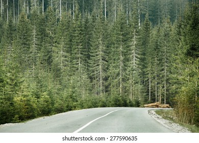 Healthy coniferous forest with timber logs beside desolate road, prepared for transportation in a wilderness area of national park. Sustainable timber industry and healthy environment concepts.