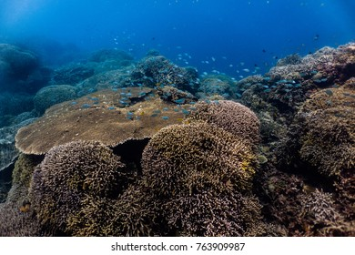 Healthy coral reef with coral fish.
