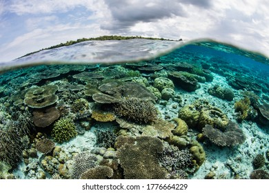 A healthy coral reef grows in the shallows of Wakatobi National Park, Indonesia. This remote, tropical area is part of the Coral Triangle, known for its incredibly high marine biodiversity.