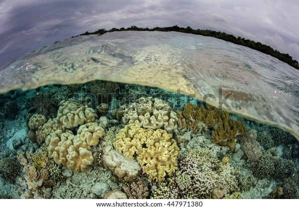 Healthy corals grow on a shallow reef in Wakatobi National Park, Indonesia. This beautiful and remote area harbors an extraordinary amount of marine biodiversity.