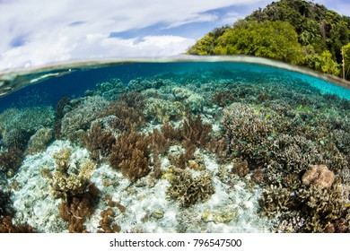"""Healthy corals grow in the shallows fringing an island in Raja Ampat, Indonesia. This area is known as the """"heart of the Coral Triangle"""" due to its incredible marine biodiversity."""