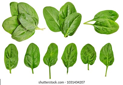 Healthy diet. spinach. greenery. For cooking food. Diet. For your design.