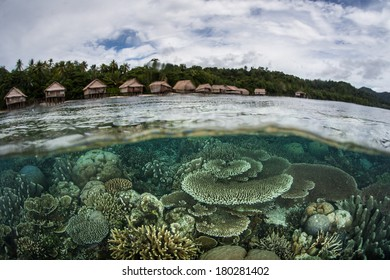 A healthy, diverse coral reef grows in the shallows of Raja Ampat, Indonesia. This remote region, within the Coral Triangle, is known for its extraordinary beauty and tropical marine biodiversity.