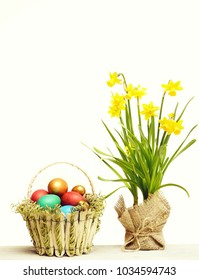 healthy food, spring yellow narcissus flower on green stem in burlap, traditional easter colorful painted eggs in basket isolated on white background, womens or mothers day, future life, copy space