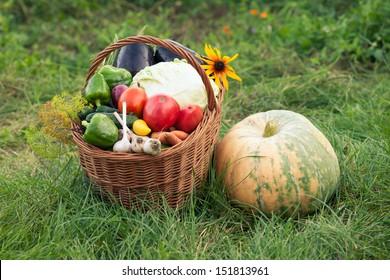 Healthy Fresh Organic Vegetables in the Basket. Harvest.