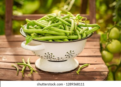 Healthy green beans in a small greenhouse